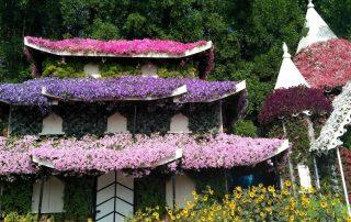 Цветы в ОАЭ